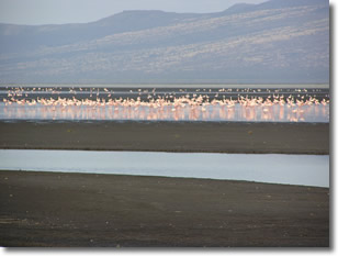 Lake Natron flamingos