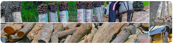 Cross Border Timber Trade Between Kenya and Tanzania